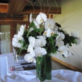 White phalaneopsis orchids